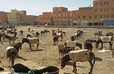 desert camping donkey trek