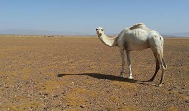 luxury-desert-camping-trip2